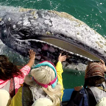 Swim with Humpback Whales in the Silver Bank off the coast of the Dominican Republic