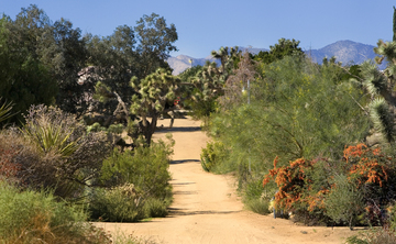 Memorial Day Retreat at Joshua Tree California