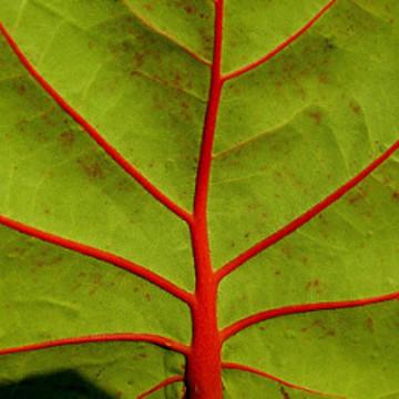 Balanced Body Plant-based Cleanse