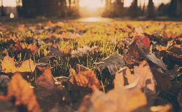 An Autumn Day of Contemplation