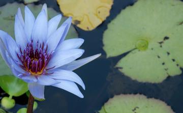 Improvising Life: A Five-Night Silent Meditation Retreat