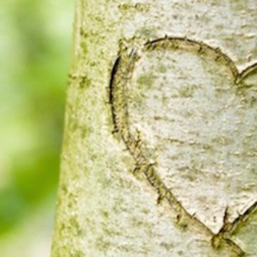 Love Meets Wisdom