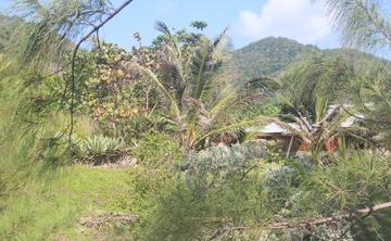 New Moon Yin Retreats in Jamaica: January