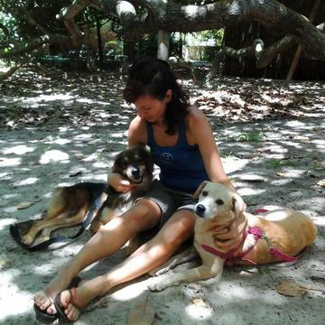 Relax in the company of our loving dogs