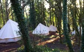 Woodland Retreat: Nature Connection Mixed – 3 nights