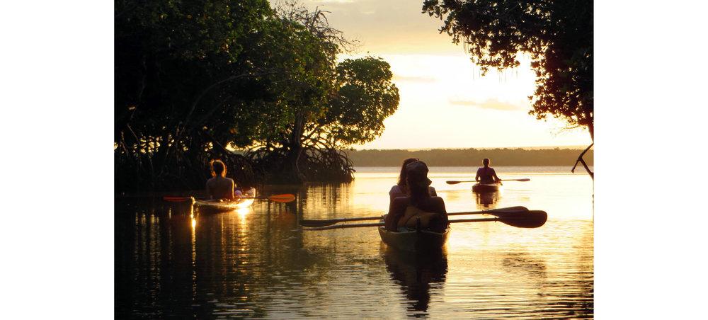 mangroves1.jpg