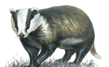 Badger and Bat Watch