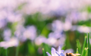 Special Earth Day Retreat: Contemplative Ecology – Renewing our Earth Connection