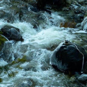 Stewart Mineral Springs and Mt. Shasta Retreat