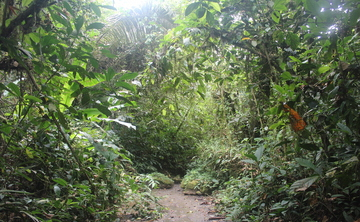 12 day Ayahuasca Medicine Retreats in Amazon of Ecuador