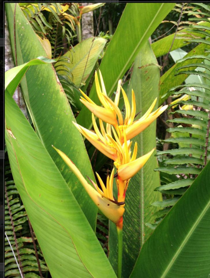 Tantra Hawaii Big Island