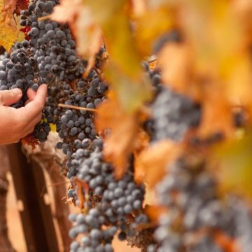 Sonoma ~ Wine, Dine & Yoga Weekend