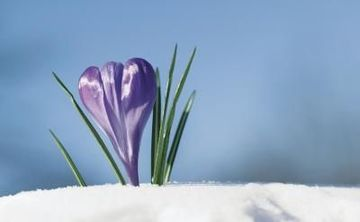 Winter Wildflower HIke