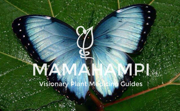 Deep Immersion Dieta with Ayahuasca and Master Plants 10 Day Retreat, November 25-December 4