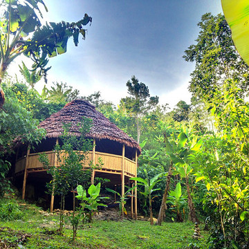 Deep Immersion Dieta with Ayahuasca and Master Plants -  10 Day Retreat January 5-14 2017
