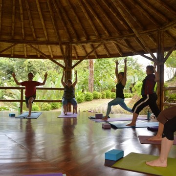 Rainforest Yoga Retreat with Mitch Coleman