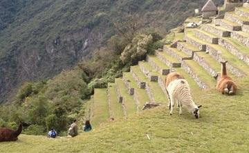 10 Day Ayahuasca Retreat and Machu Picchu (Jan 19-29)