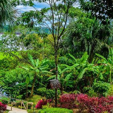 1 Month Work Exchange in Amazon Rainforest