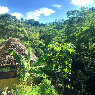 Deep Immersion Dieta with Ayahuasca and Master Plants -  10 Day Retreat, August 27-September 5 2017