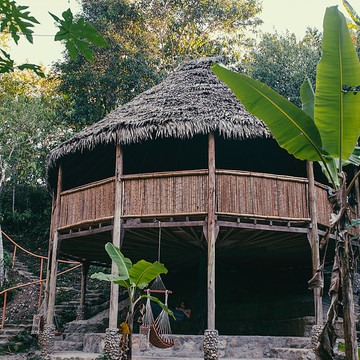Deep Immersion Dieta with Ayahuasca and Master Plants -  10 Day Retreat, November 5-14 2017