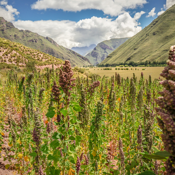 Ayahuasca Womens Retreat - Sacred Valley, Peru May 11th-21st 2017