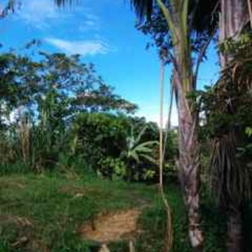 Doña Ottilia Ayahuasca Healing Centre