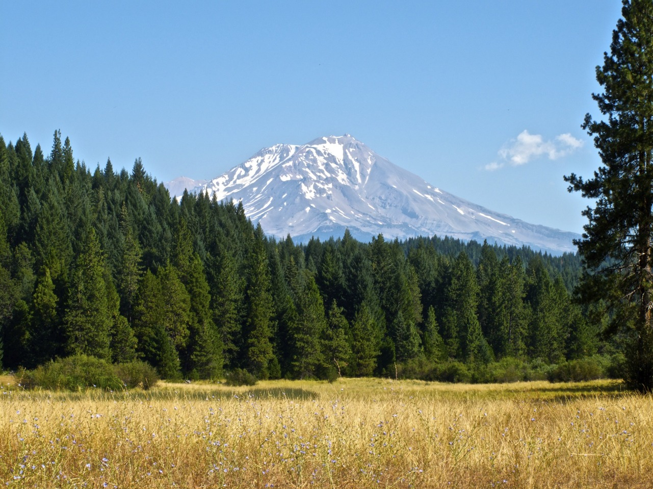 mount shasta single jewish girls We're 3,396 single business professionals  gorgeous girls of southern cali (20's  mount shasta tour 2017 we're 113 members .