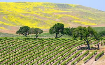 California Wine, Dine & Yoga