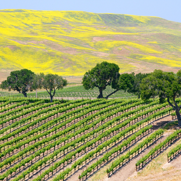 California Wine, Dine & Yoga