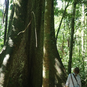 Cleansing, Healing & Learning in the Amazon - June