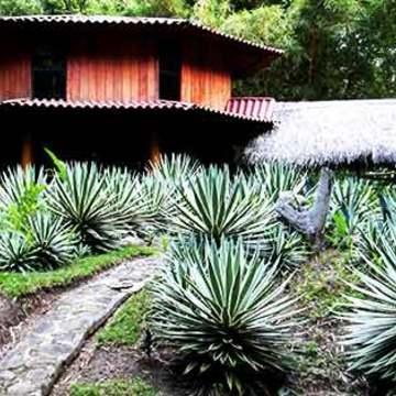 14 Days Ayahuasca & Yoga Retreat in the Amazon, Peru - July 2017