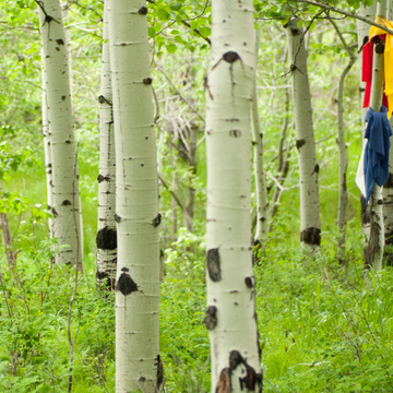 Waking to the Dream of the Earth: A Women's Retreat