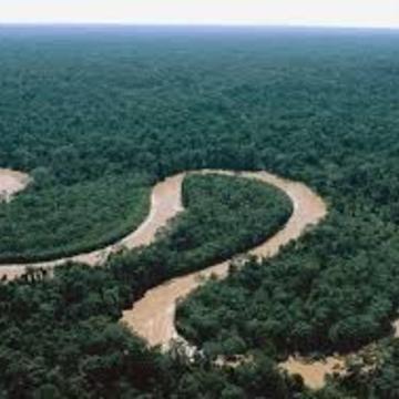 Amazon Jungle Ayahuasca Economy Retreat (1 July 2017)