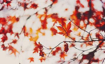 Feel The Vibration Fall Retreat
