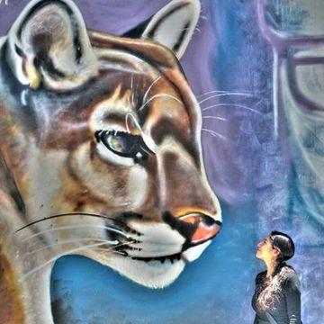 Wara Wara Puma