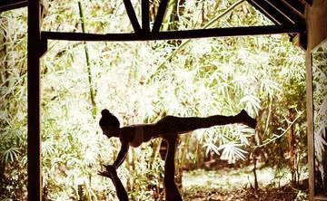 Explore Yoga in Costa Rica