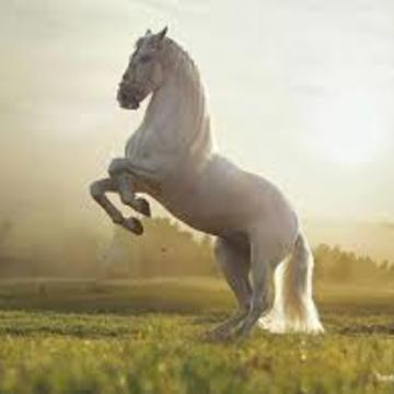 Retreat horse ridding Poland (6 Aug 2017)