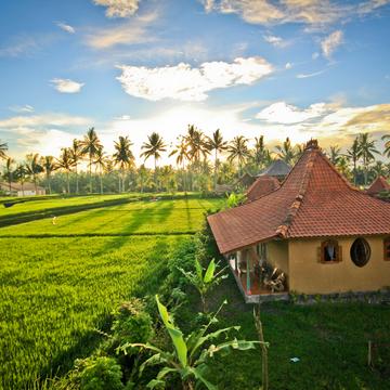 Detox Your Mind & Body Retreat, Ubud, Bali