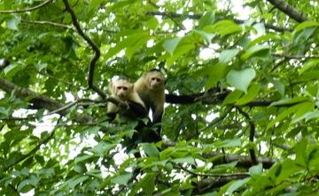 Chen Tai Chi Retreat in Pavones Village, Costa Rica