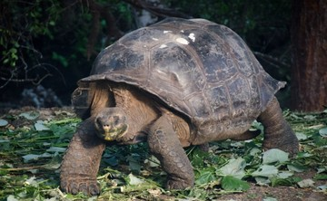 Thanksgiving Galapagos Yoga Adventure