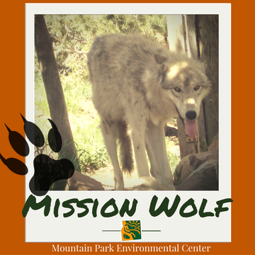Mission Wolf  (Entering 8th-10th Grade)