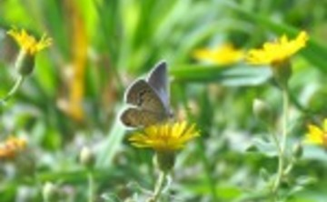 11th Annual Pueblo Mountain Park Butterfly Count