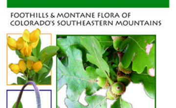 Field Guide: Plants of Pueblo Mountain Park