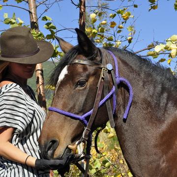 Valemount BC – Ride & Shine Horseback trip   (6 DAY)