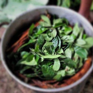 12 day Ayahuasca and Master Plant Retreat